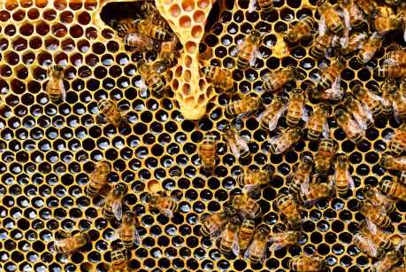 honeycomb close up detail honey bee